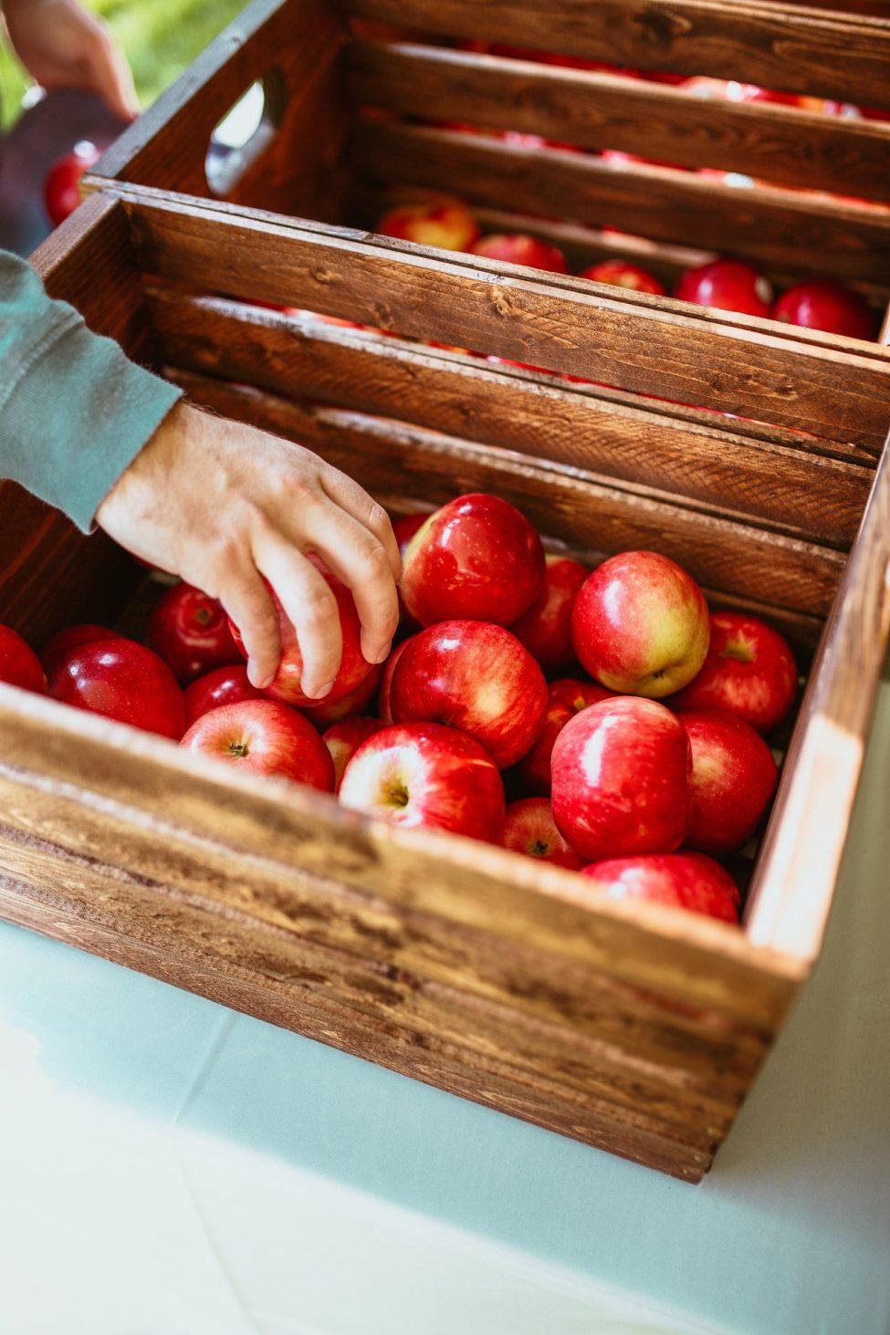 Alles over groente & fruit