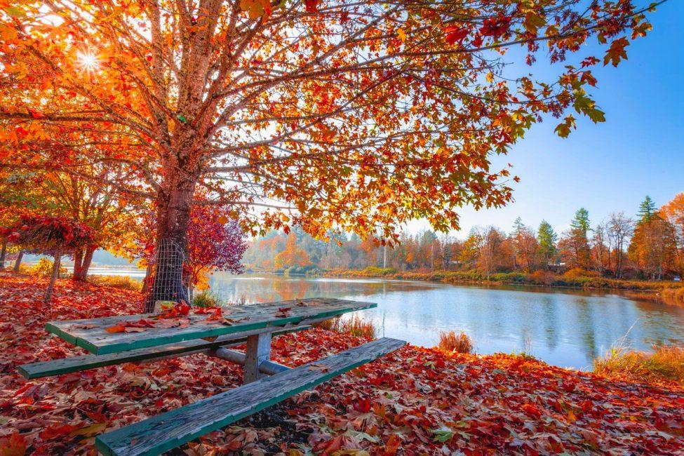 Herfst, het immuunsysteem en vitamine D
