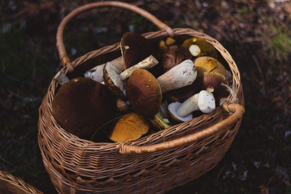7 eetbare voedingsmiddelen die je kan plukken in het bos (herfsteditie)